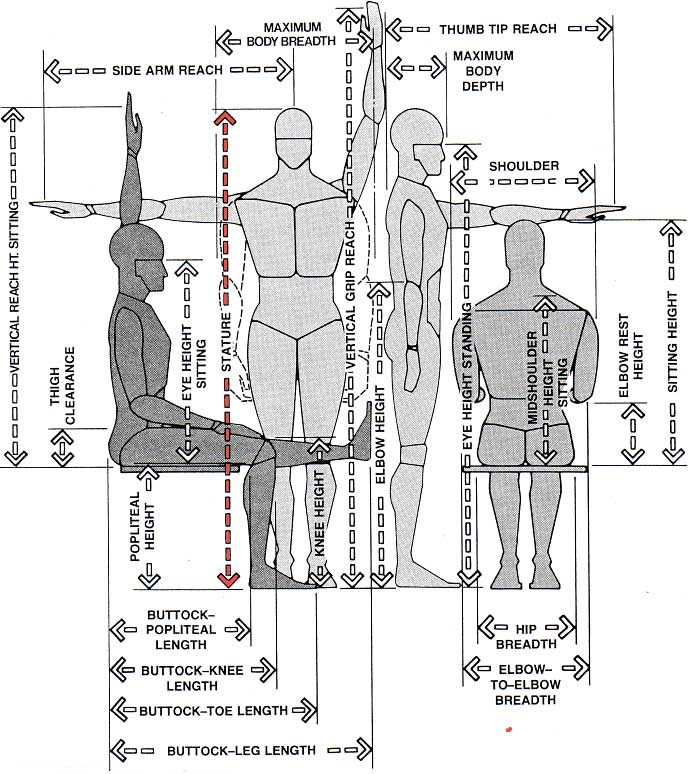 Anthropometrics qpractice ncidq glossary for Chair design terminology